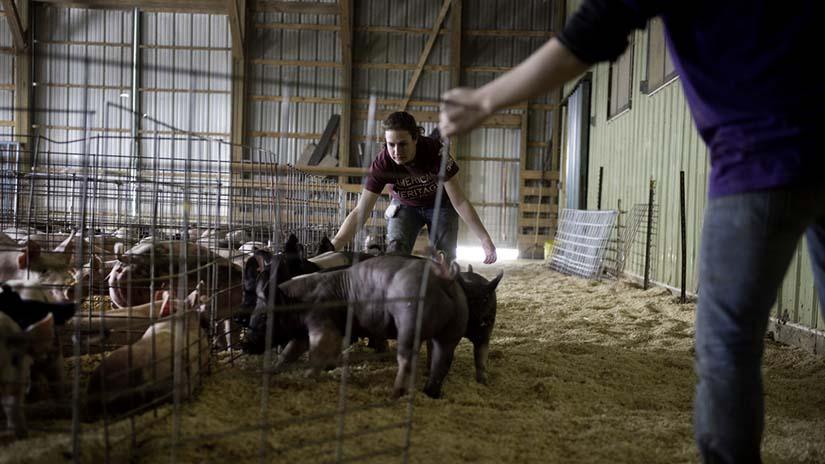 ANFS 8th Annual Show Pig Auction