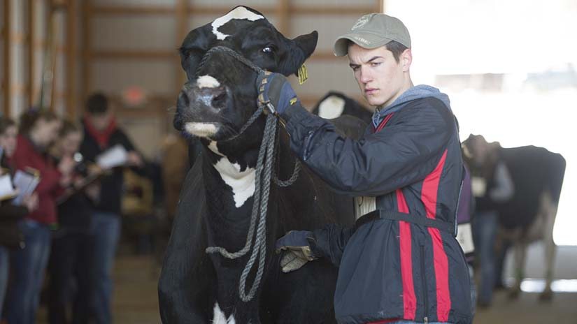 ANFS AgTech Contest dairy cow