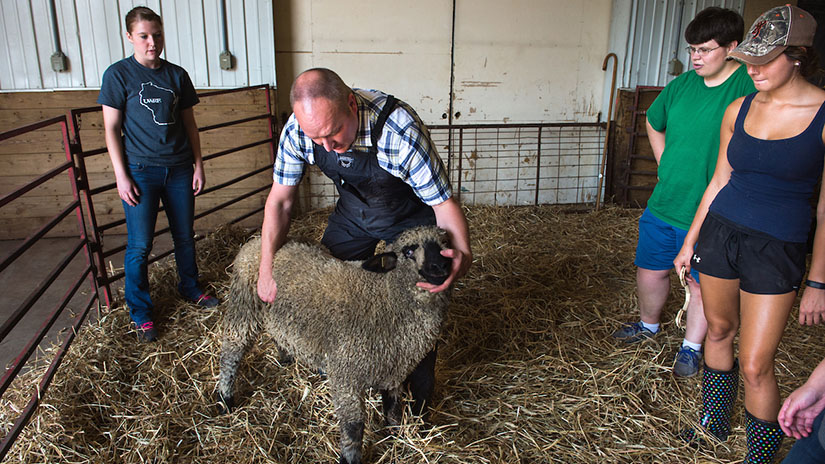 Animal Industries course sheep