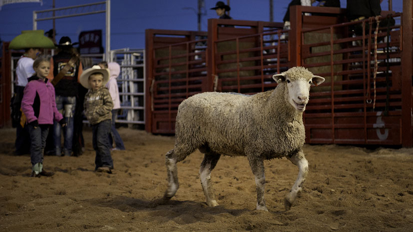 Falcon Frontier Rodeo Kids Sheep