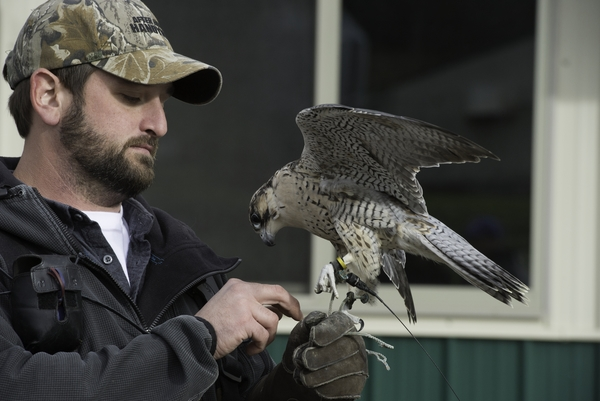Jordan Jones Falconry