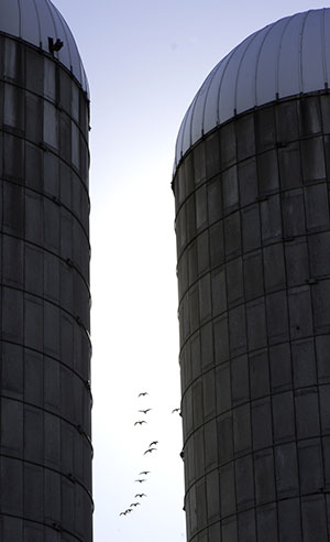 Silos at Campus Farm 0914202