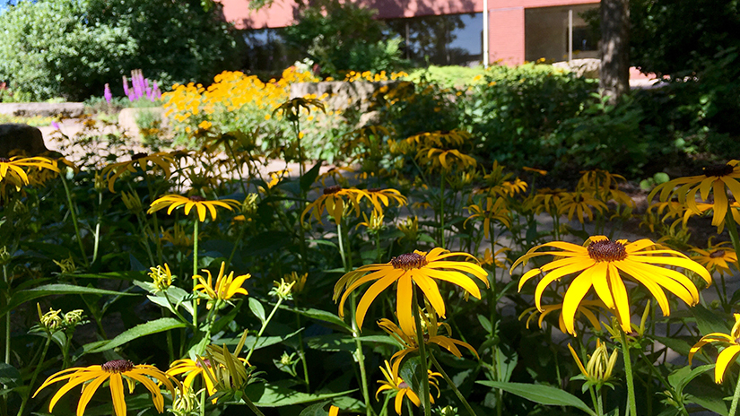 Morning shadows in late summer Dahlka Garden