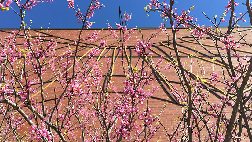 A redbud tree graces the sundial on Kleinpell Fine Arts.