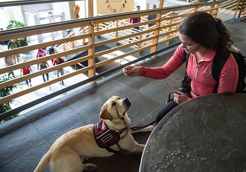 Partnership brings four-legged hands-on learning to campus ...