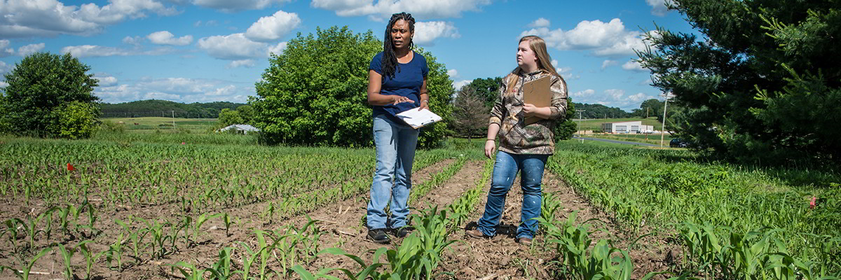 Crop and soil field research