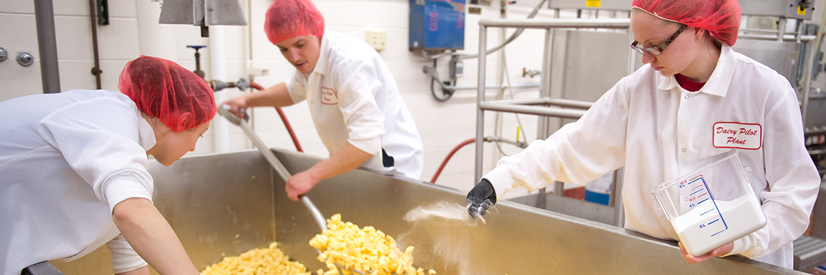 Students making cheese at the dairy pilot plant